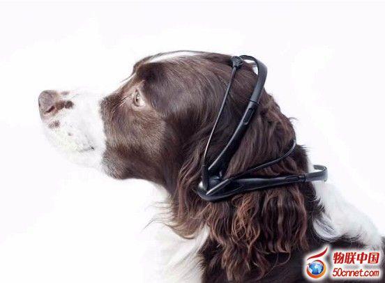 狗叫翻译器:汪星人你究竟在吼什么