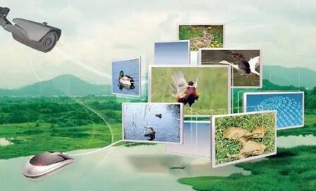 浅析农业物联网带来现代农业新改革