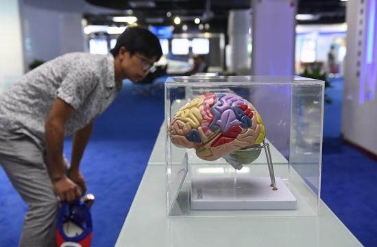 中科院科技创新成果展江西巡展上,一名观众在观看大脑结构模型。新华社资料